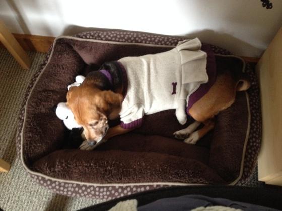 Annabelle enjoying a well-deserved rest.