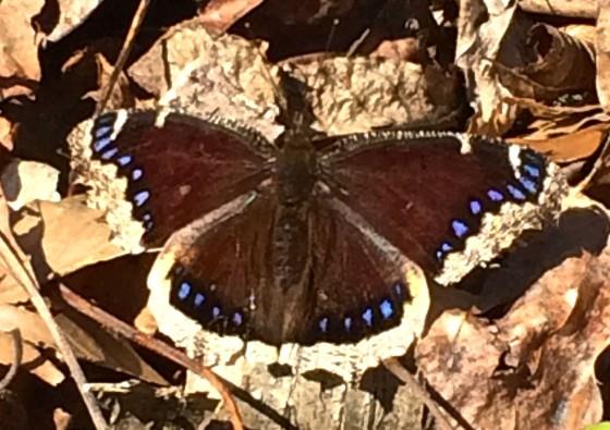 2014 04 06 butterfly