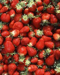 440px-Chandler_strawberries