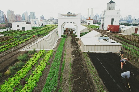 Brooklyn Grange Rooftop Farm. Photo by Les Loups.