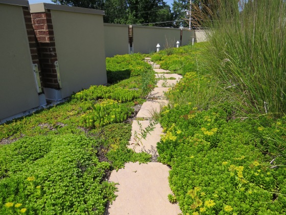 Brookletts path and groundcover