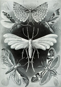naturalist blog logo