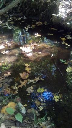 bb creekbed
