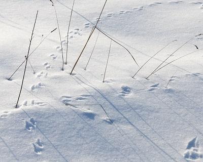 _ASR2447 Footprints in snow email