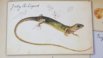 Lizard from Beatrix Potter MMN