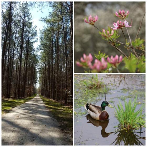 spring blog