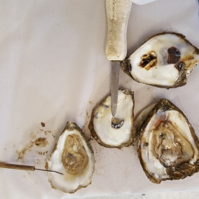 20160615_Oyster Dissection w tools